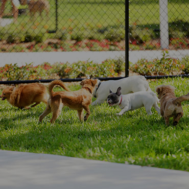 Large Dog Park at The Haven Apartments